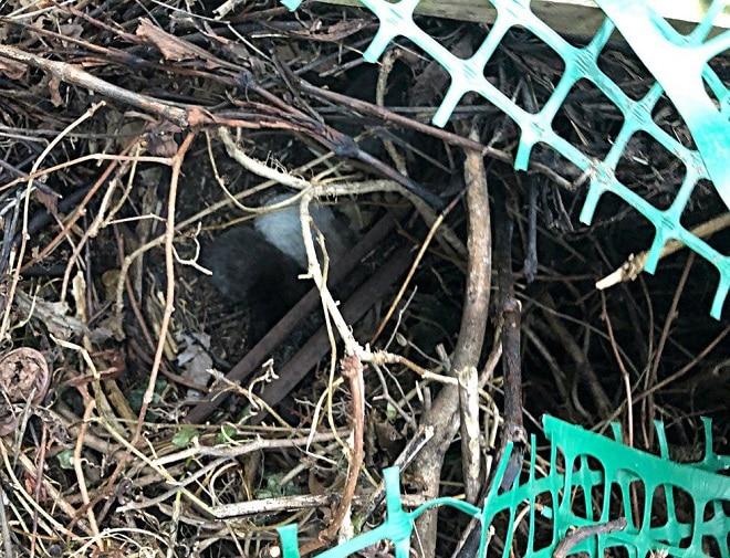 Кошка в гнезде