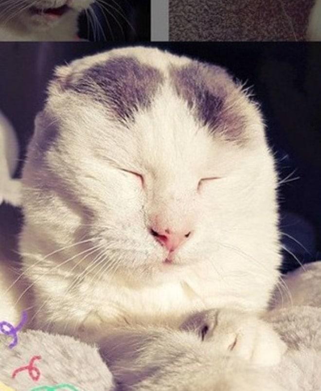 Кошка жмурится