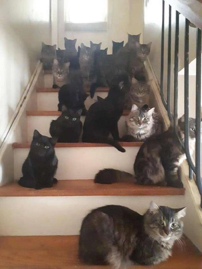Коты на лестнице