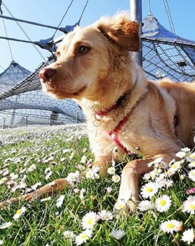 Собака в цветах