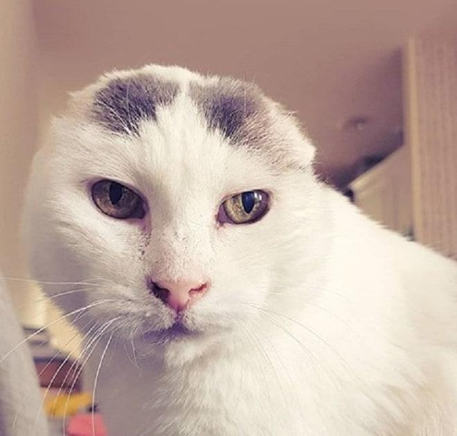 Кошка без ушек