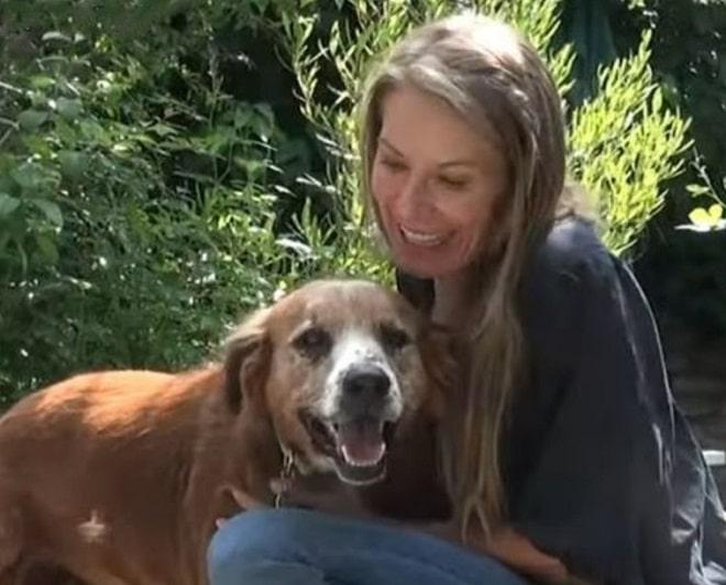 Пес с девушкой