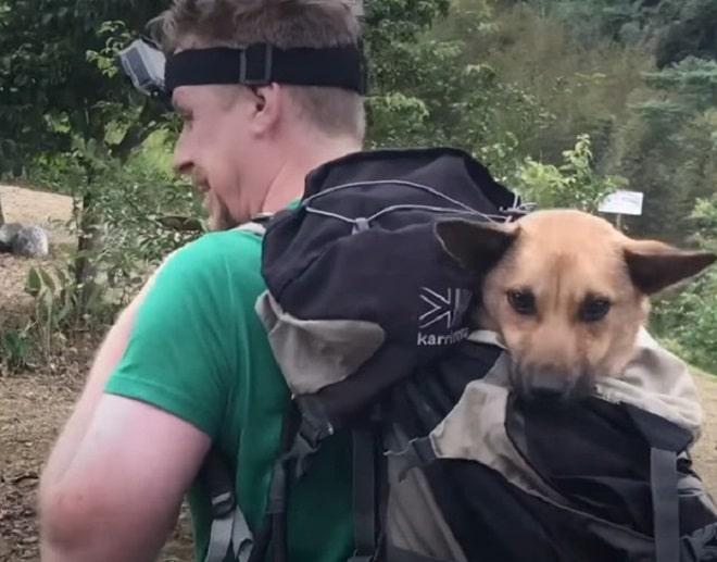 Собаку несут
