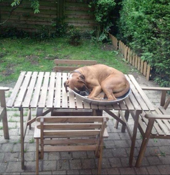 Собака в тарелке