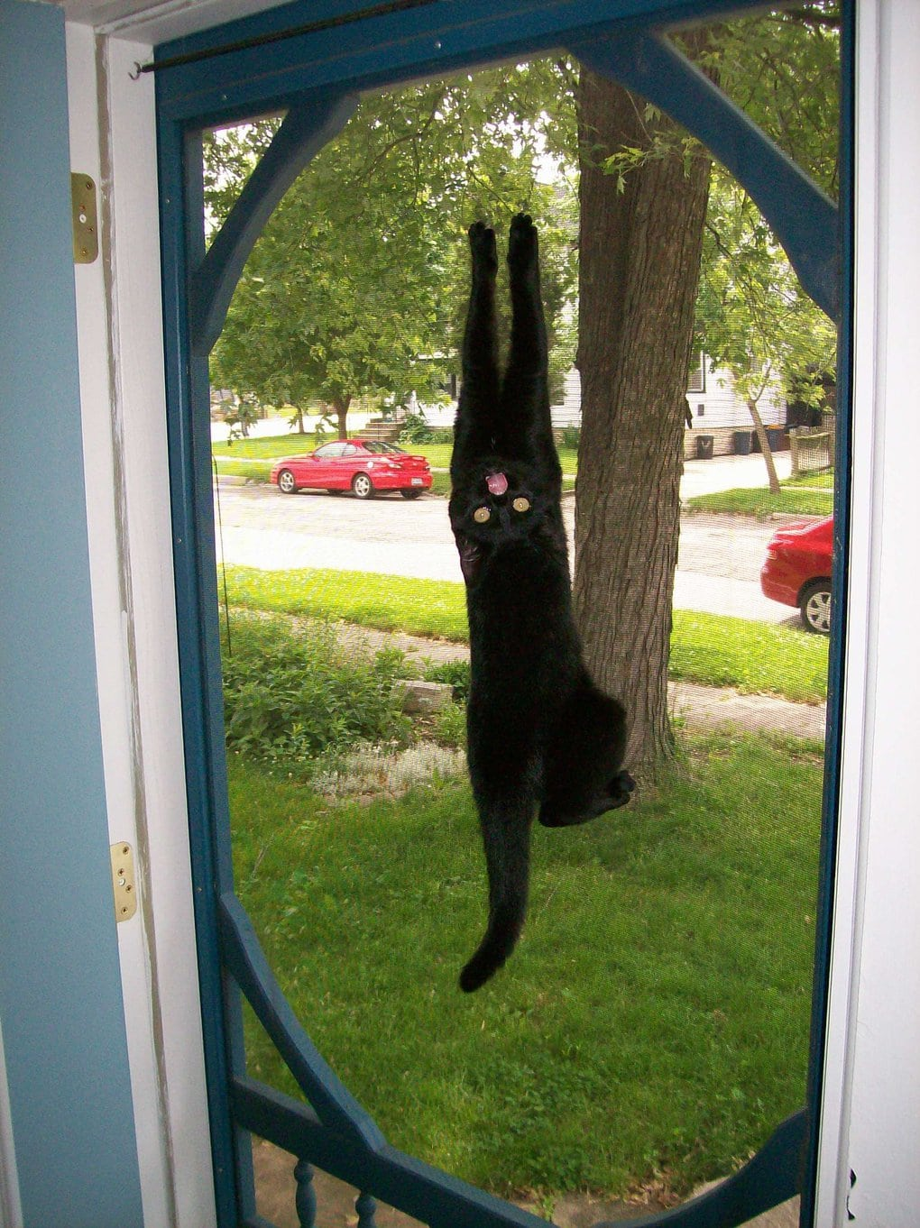 кот висит на дверях
