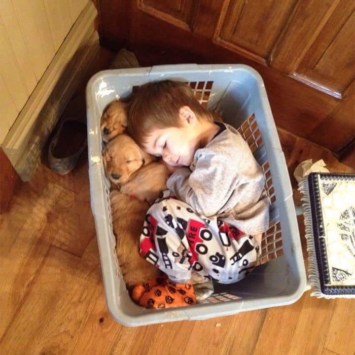 мальчик спит рядом со щенками