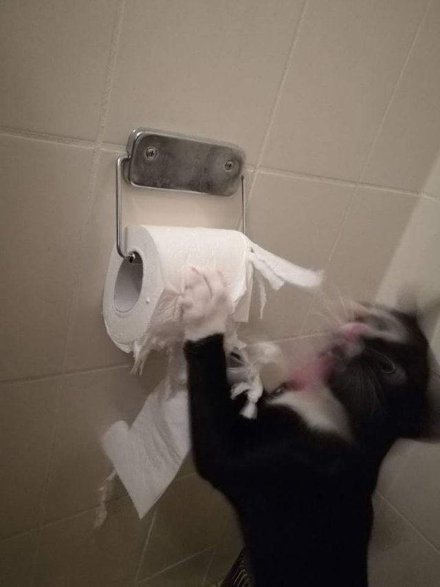 кот дерет бумагу