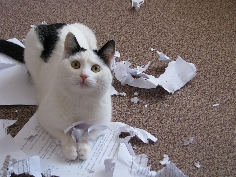 кот проказничает