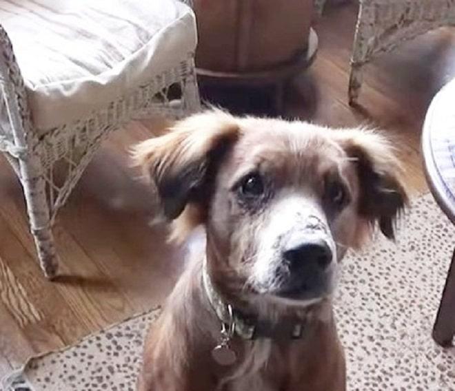 Пес с ошейником