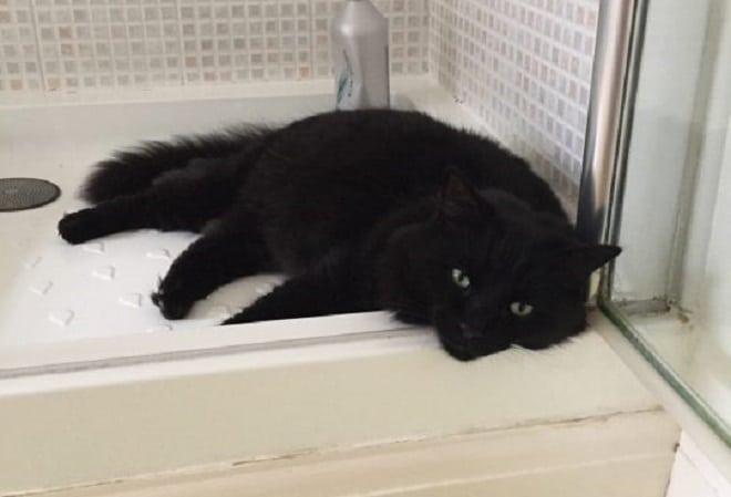 Кот лежит в душе