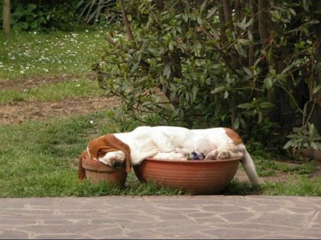 Собака в вазонах
