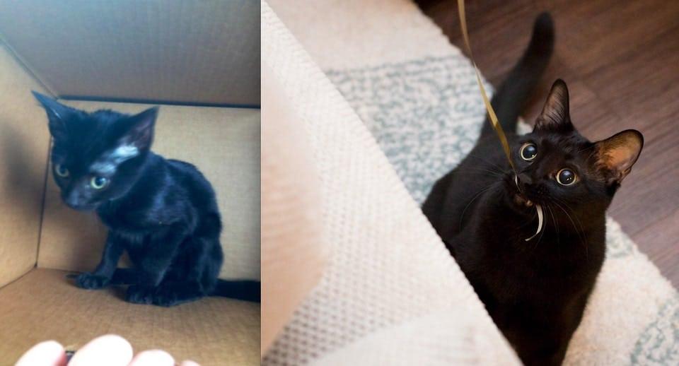 котенок до и после рис 4