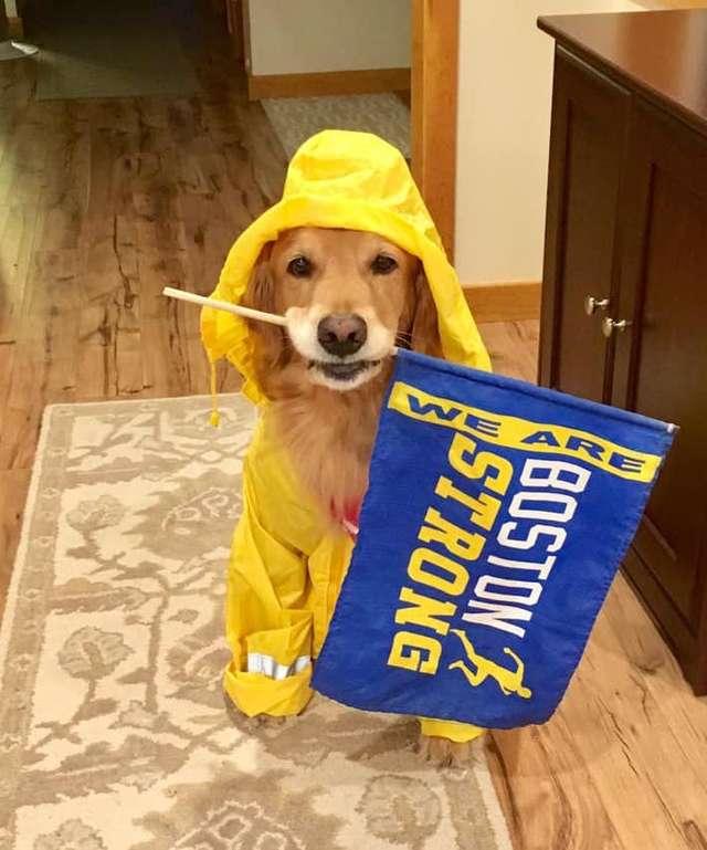 собака с флагом