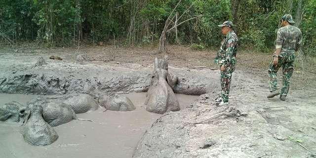 слонята в грязи рис 2