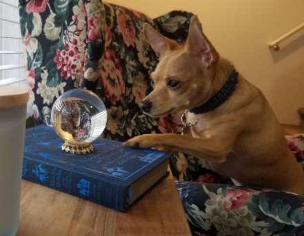 пес и стеклянный шар