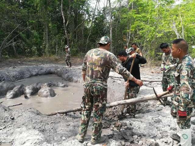 спасение слонят