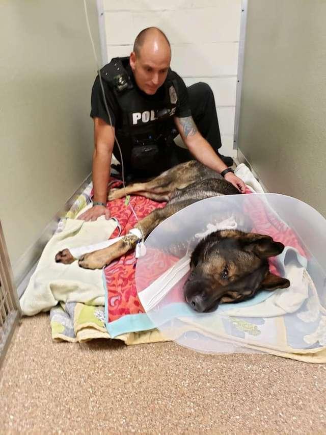 полицейский и собака