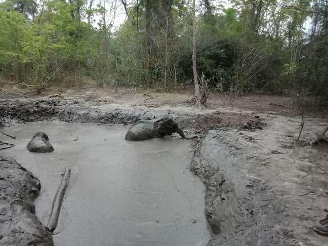 слоны в грязи