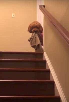 собака на лестнице