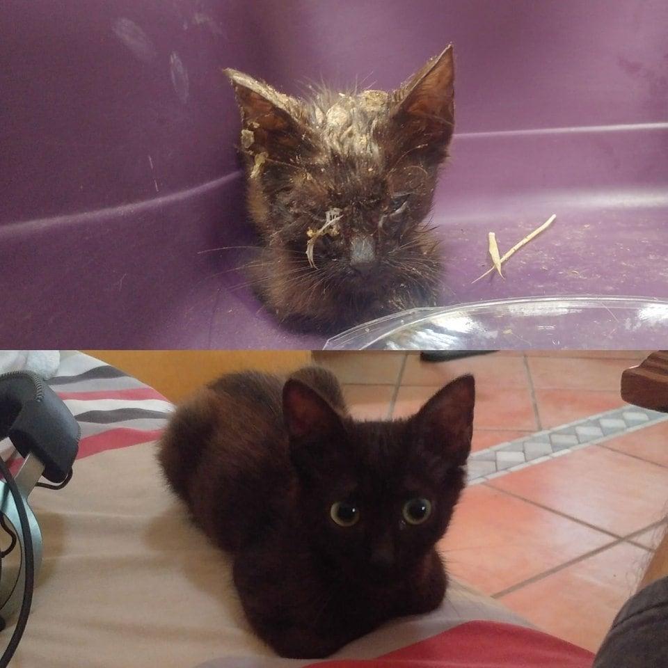 котенок до и после рис 2