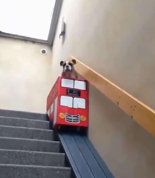 Пес на ступеньках