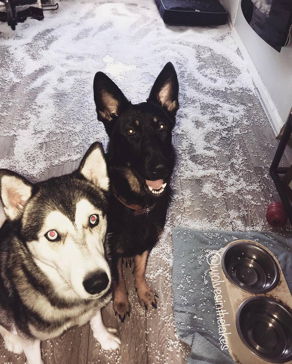 собаки нашкодили
