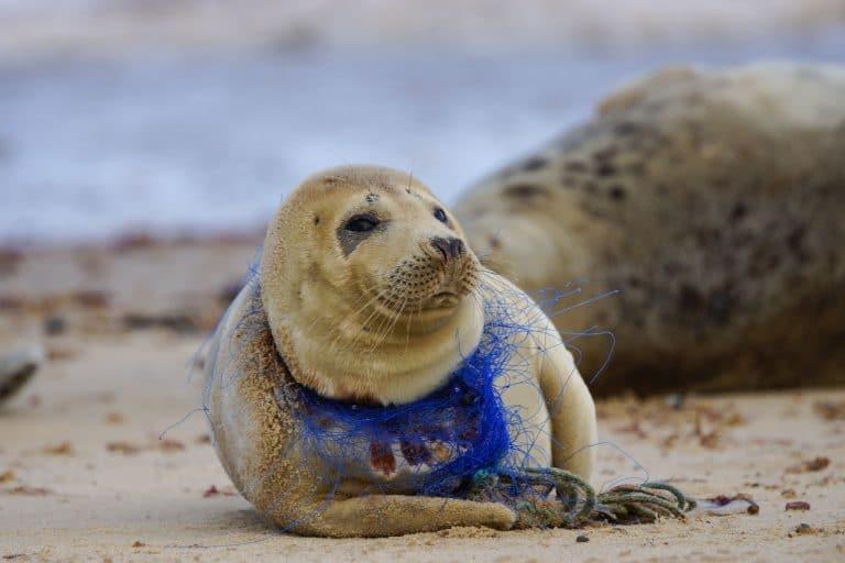 тюлень на берегу