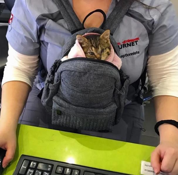 котенок в сумке