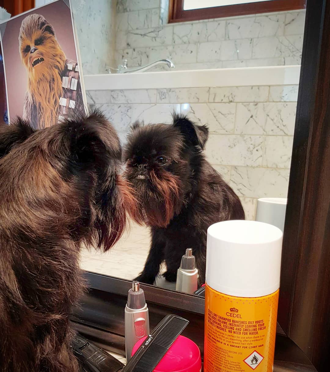 пес у зеркала