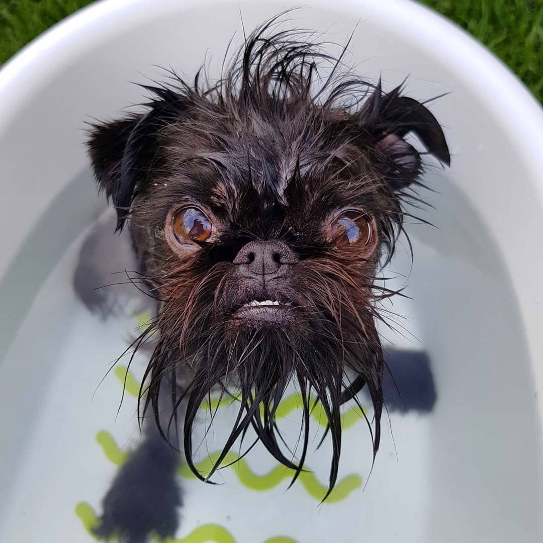 пес купается