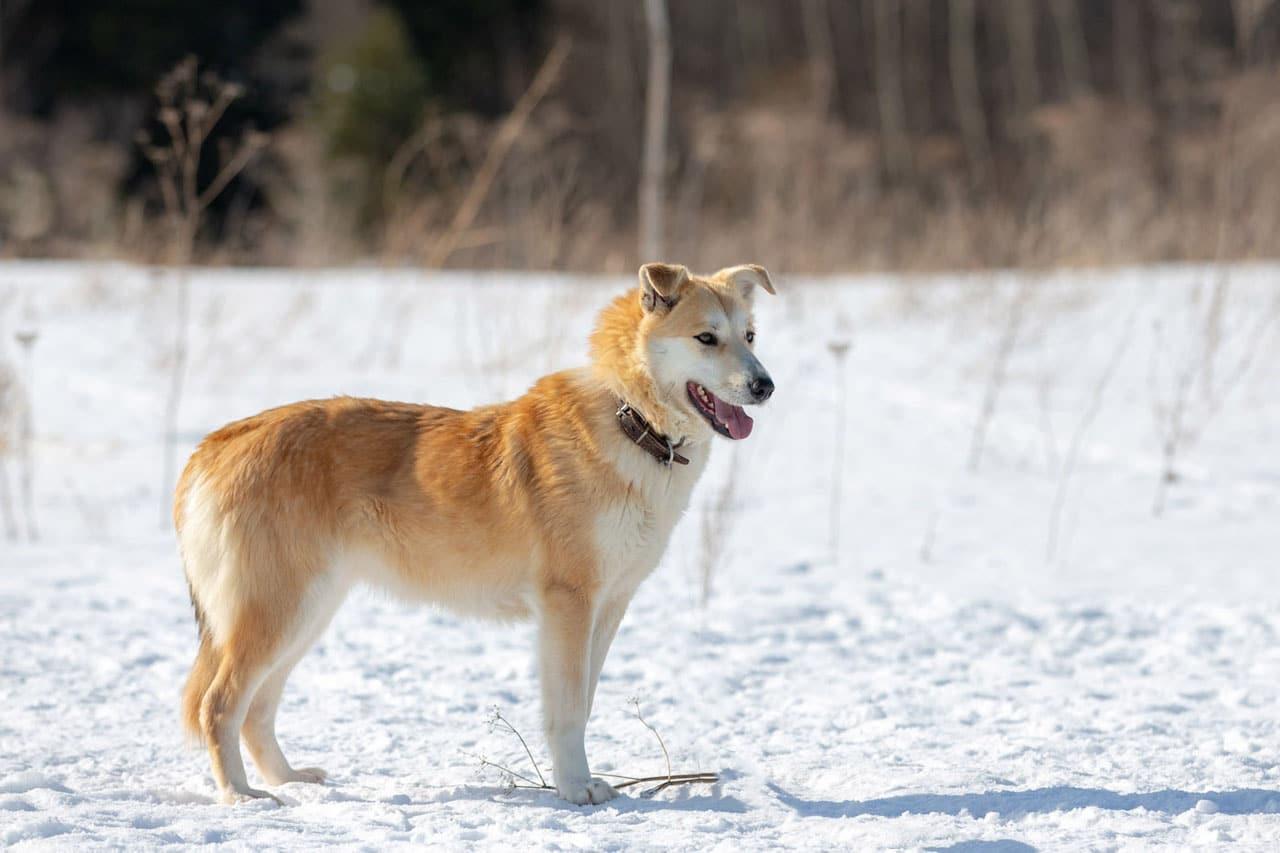 собака на прогулке