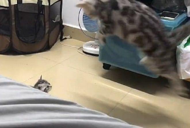 Кошка в полете