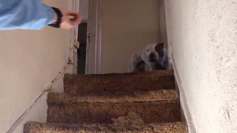 испуганный пес