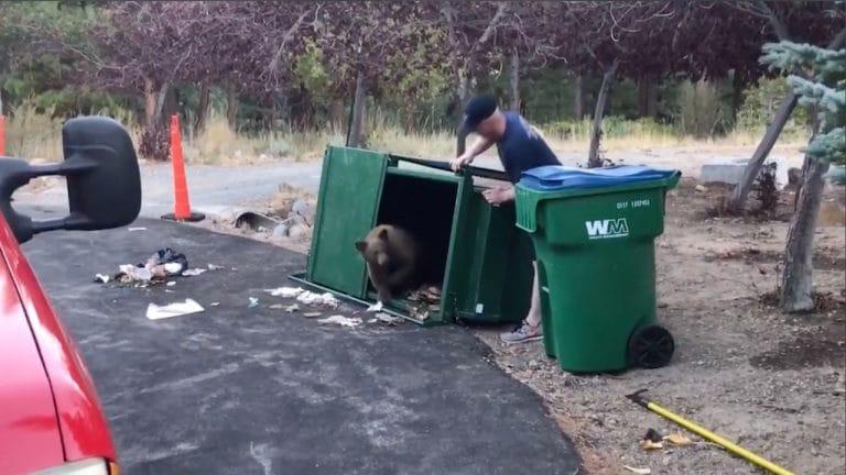 медвежата в мусорном баке