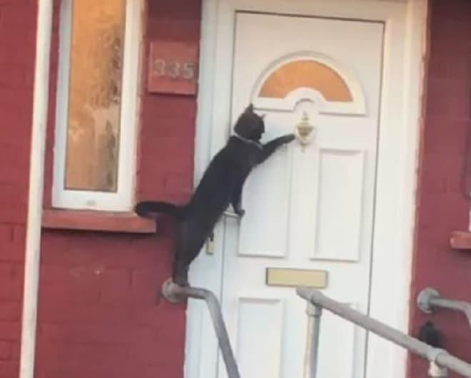 Кошка у двери