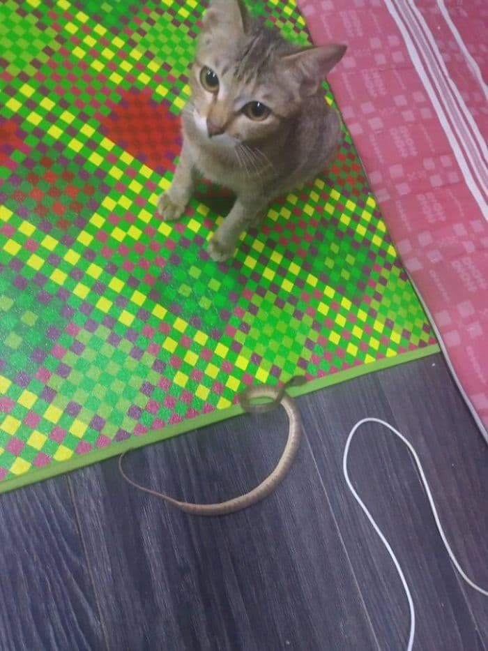 котенок принес змею