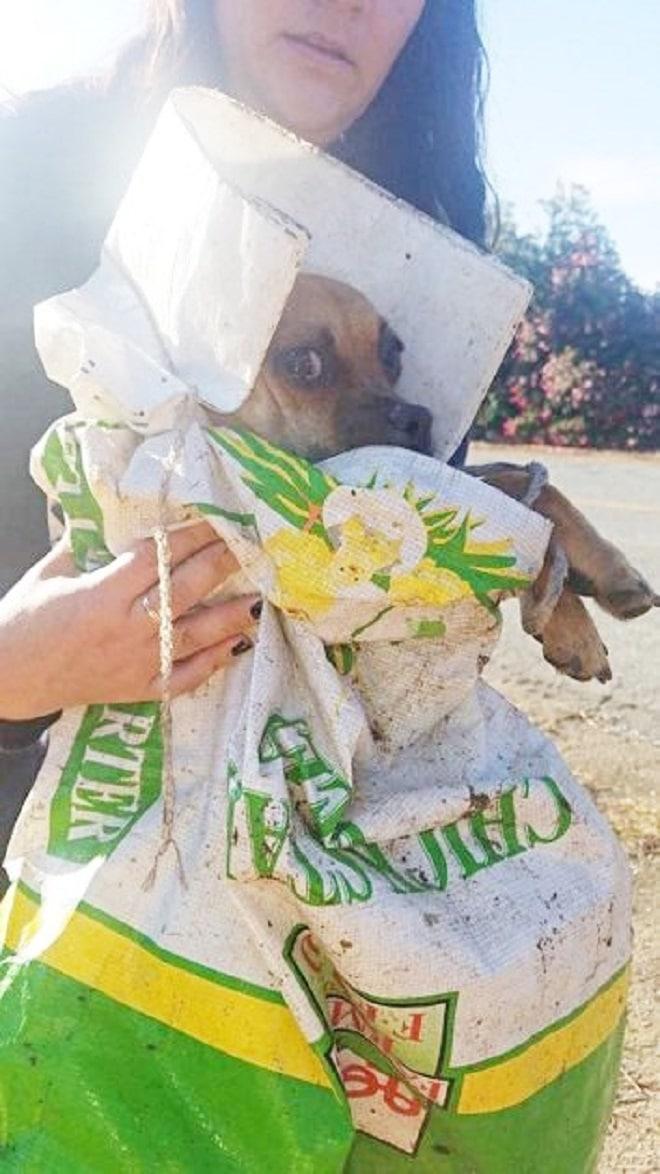 Собака в пакете