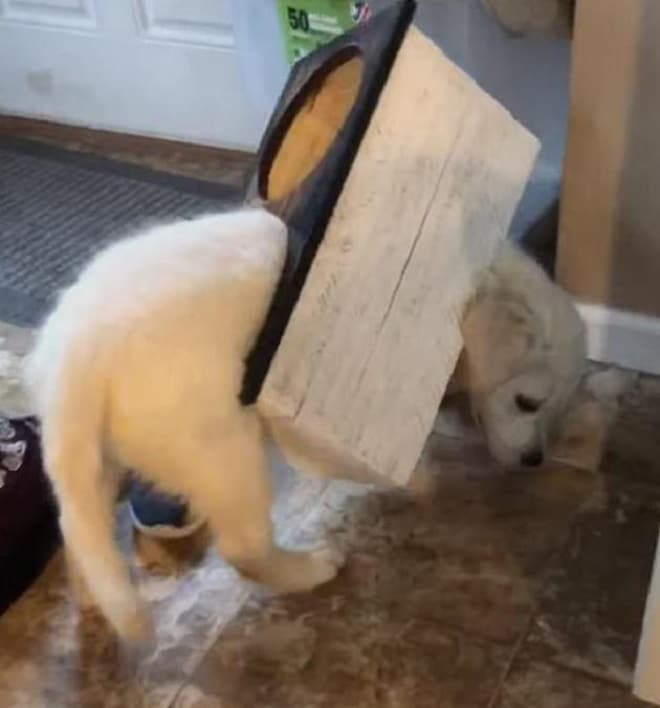 Щенок в деревянной коробке