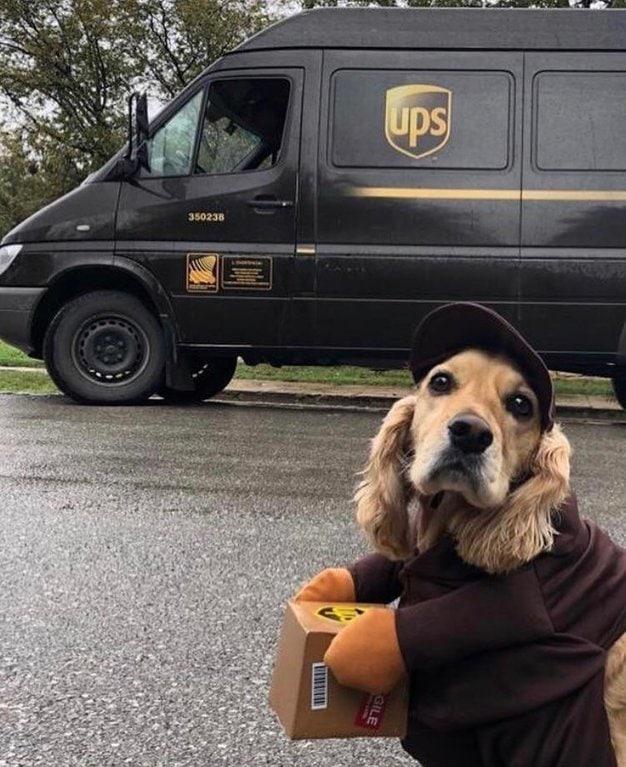 собака у машины