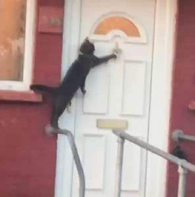 Кот стучит