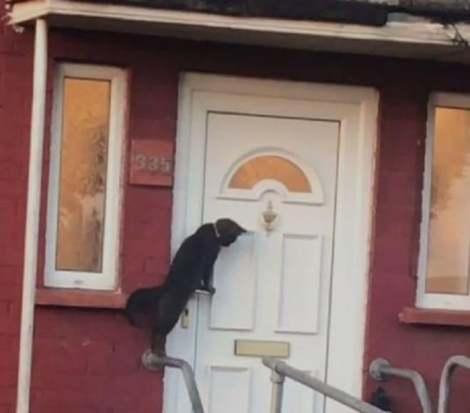 Кот спускается