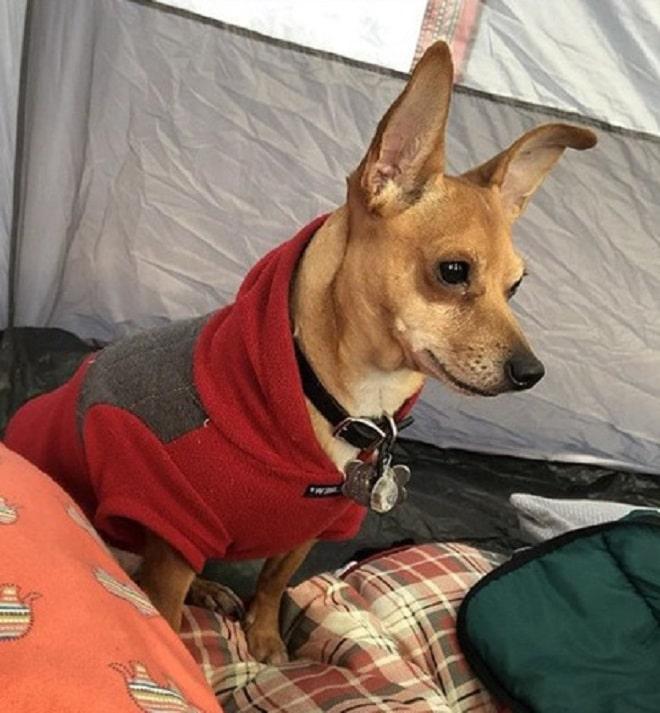 Пес в палатке