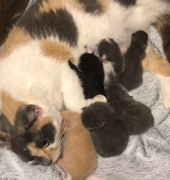 Кошка и шесть котят