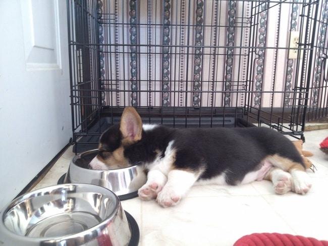 щенок рядом с миской
