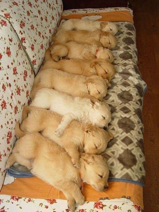 щенки спят на диване