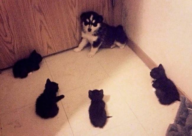 котята окружили щенка