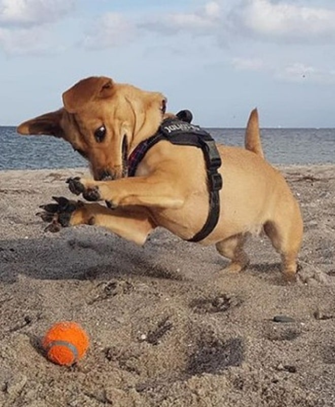 Собачка играет