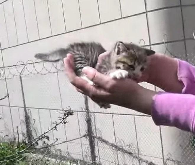 Котенок в руках