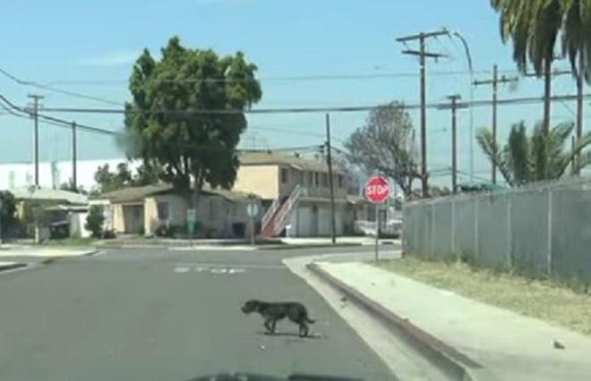 Пес переходит дорогу
