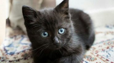 tiny black kitty